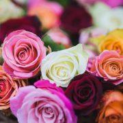 گل رز و انتخاب رنگ آن (بخش اول)