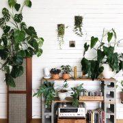 مزایا و منافع نگه داری گیاهان آپارتمانی