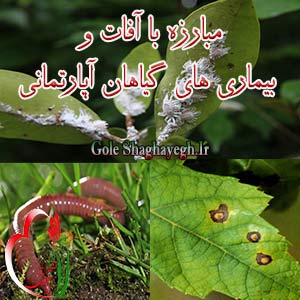 مبارزه با آفات و بیماری های گیاهان آپارتمانی