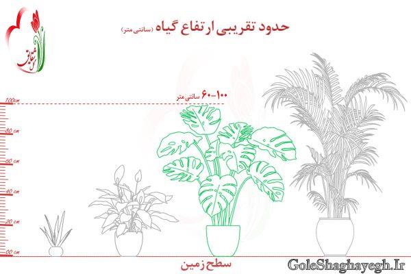 گلدان متوسط و بزرگ