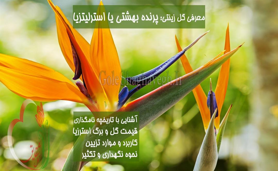 گل-پرنده-بهشتی